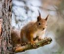 Squirrel. by kuvailija