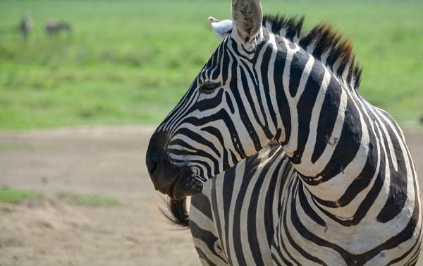 Stripes by jhaslam4