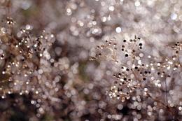 Dewdrop symphony