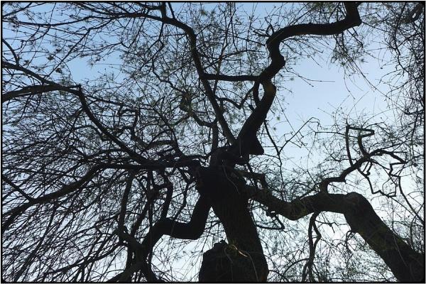 spidertree by FabioKeiner