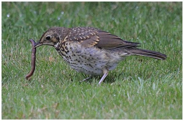 It\'s the early Bird...................... by danbrann