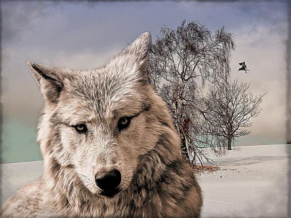 Snow wolf by fellingmal