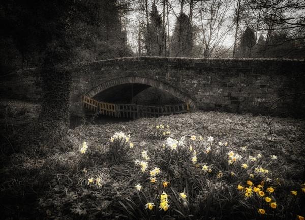 Windy spring morning by BillRookery