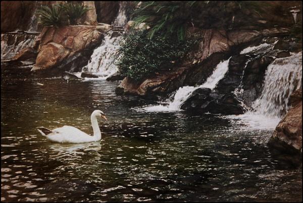 Swan Lake by ThePixelator
