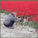 Flowers love....Spaniels by joop_