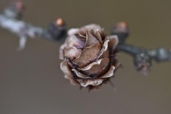 Dark as Night, Cold as Winter. by Rogi