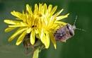 Sloe Bug & Friend by KarenFB