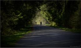 On a Shady Road