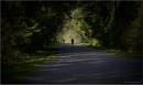 On a Shady Road by Daisymaye