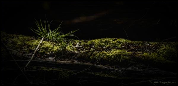 A Bit of Green by Daisymaye