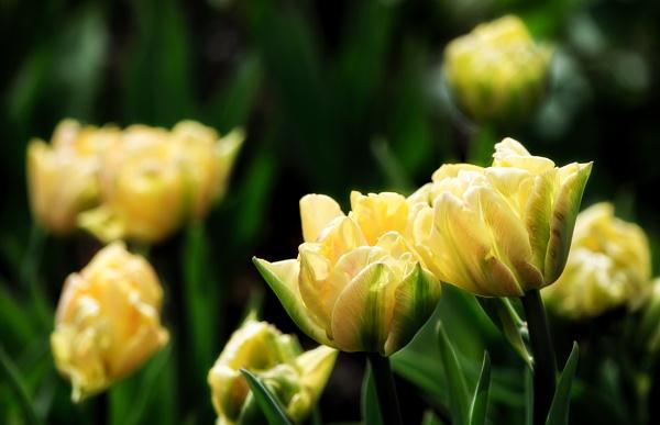 Yellows by Rorymac