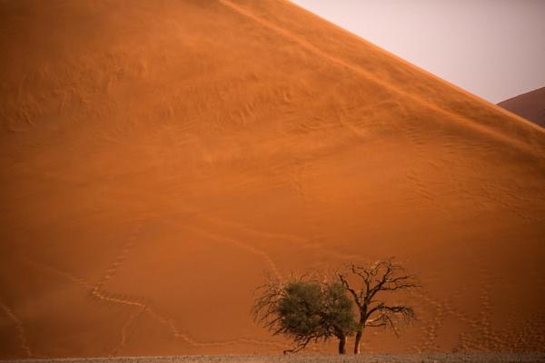Swirling Dunes by rontear