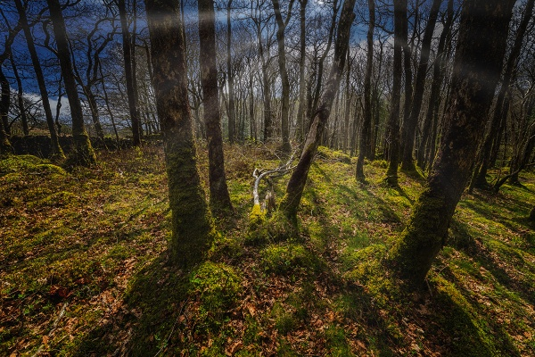 deep in the woods by meyeview