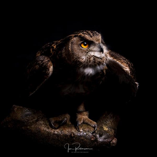ready to pounce by ianrobinson