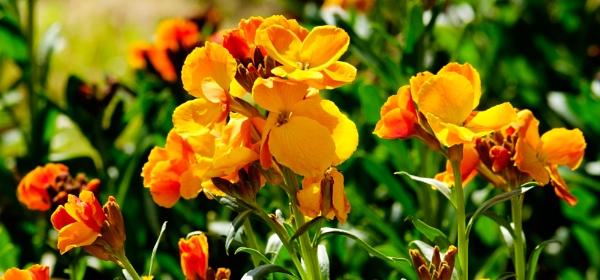 Wallflowers by Nikonuser1