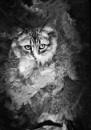 Portrait of my cat by espresso