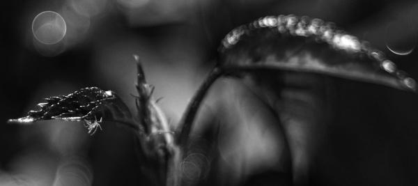 Alien...... by Mollycat
