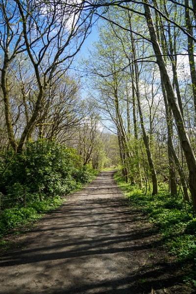 Walk in the Park 33 by Charliemc55
