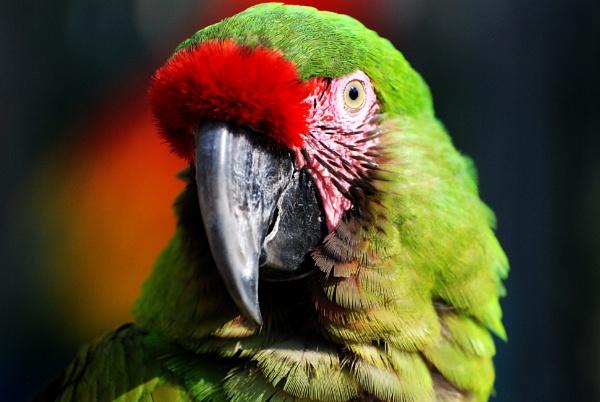 Verde by Azteca