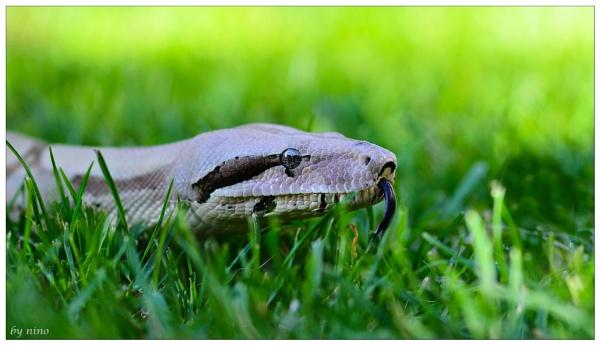 snake..8 by Nino812