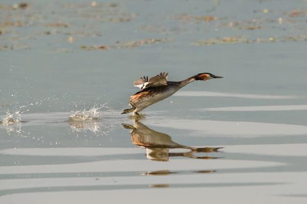 The water runner by Photoseeker