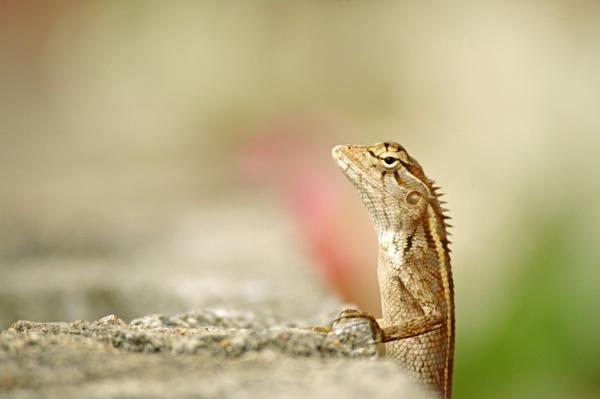 The lonely lizard by kingmukherjee