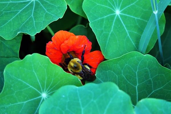 *** Busy Bee *** by Spkr51