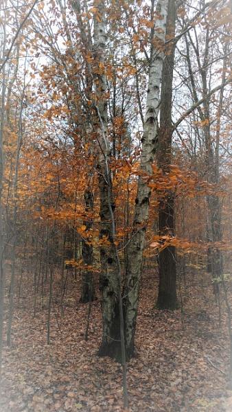POLAND - Nature\'s Impressions No.44 by PentaxBro