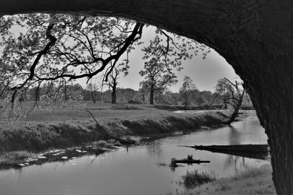 POLAND - Nature\'s Impressions No.45 by PentaxBro