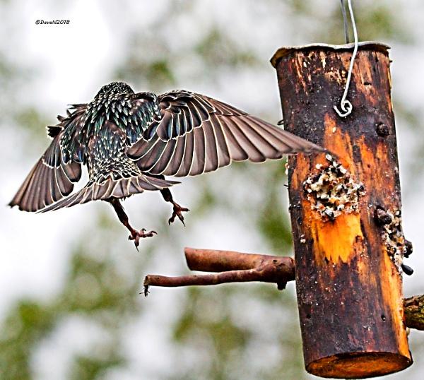 Air brakes on by DaveNewbury