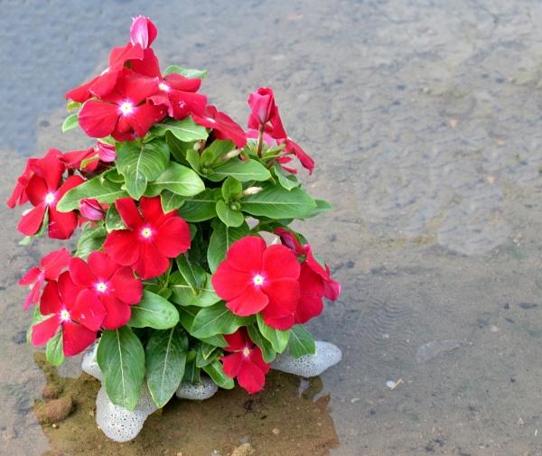 Five Pedal Flower by aliathik