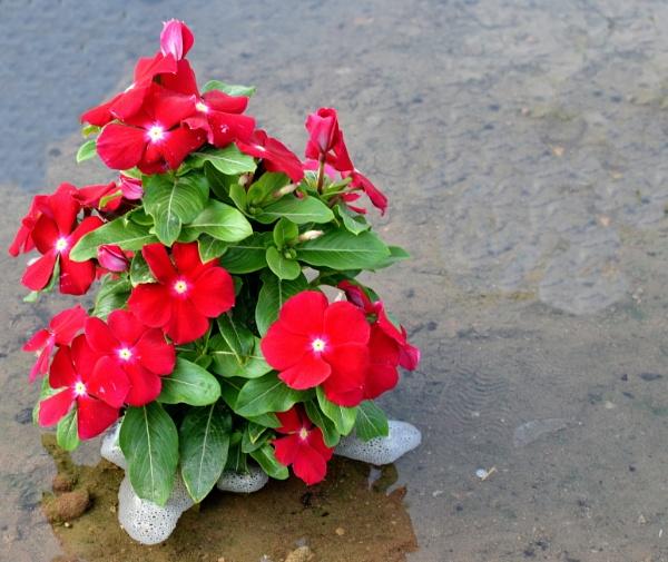 5 Petals Flower by aliathik