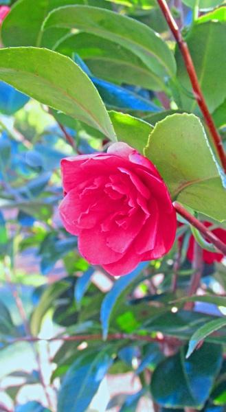 Pink flower by Reekyjeeky