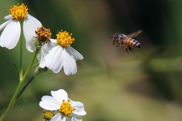 Bee by BHSDallas