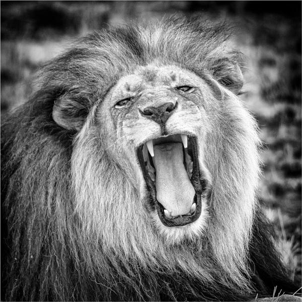 Roar! by sherlob
