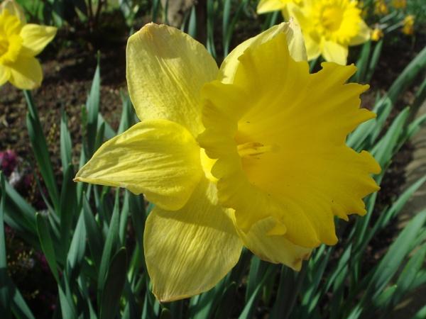 The Spring Garden by digital_boi