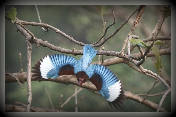 Feel Like Flying by prabhusinha