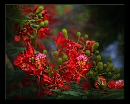 Thailand Blossom