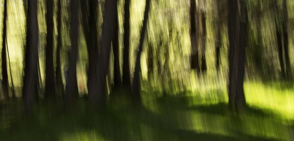 Woodland Wonder by Irishkate