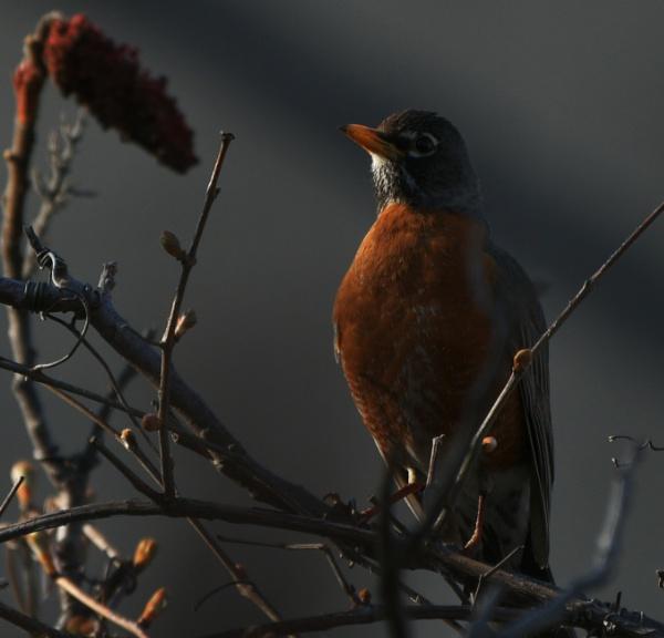 Bird Portrait by k2