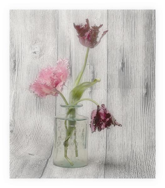Fancy tulips by deavilin