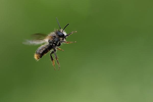 Bee by Wanilson
