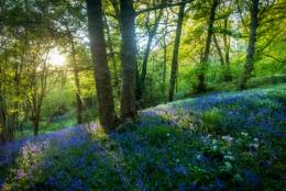 Woodland Tranquility