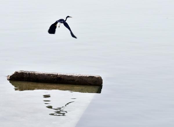 Flying away by Savvas511