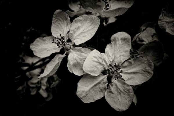 b_lossoms #2 by leo_nid