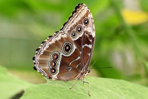 Butterfly by Glenn1487