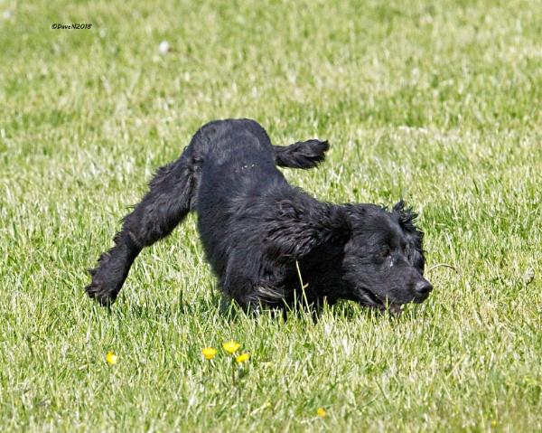 Three legs and having fun by DaveNewbury