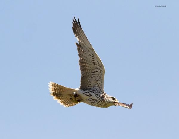 Flying in for his treat by DaveNewbury