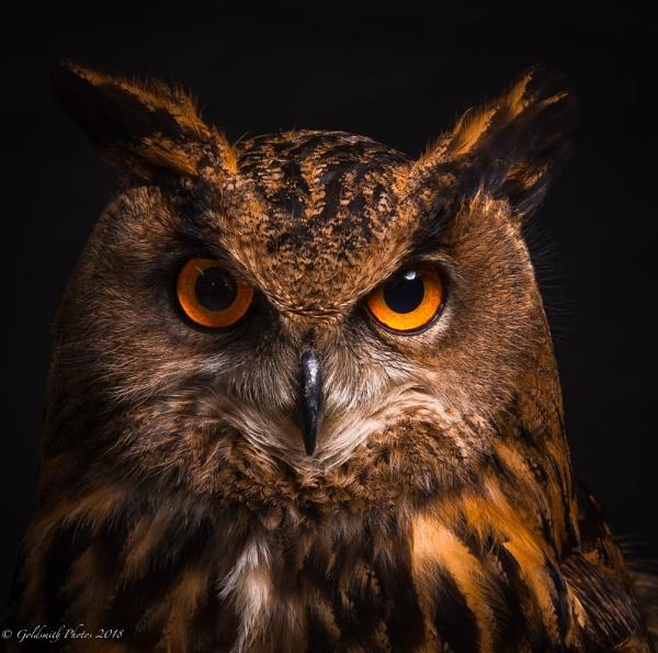 Look into my eyes by RichardGoldsmith