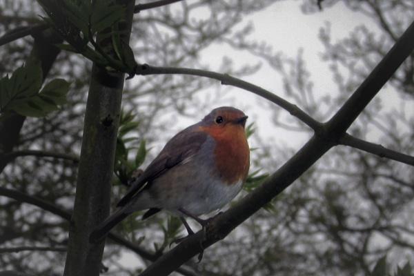 Little Robin by Reekyjeeky